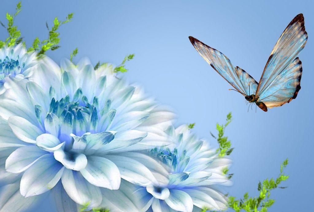 Widescreen_wallpaper_HD_nature_butterfly